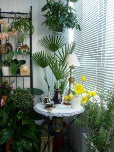 растения для обустройства лоджии