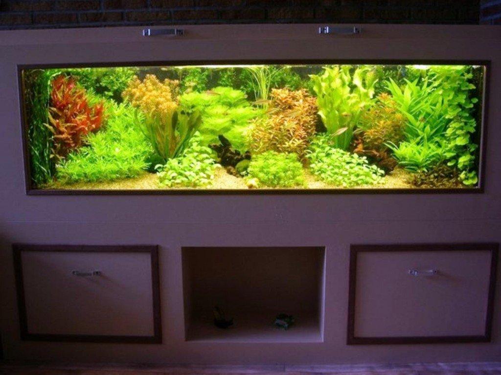подводные сады в квартире