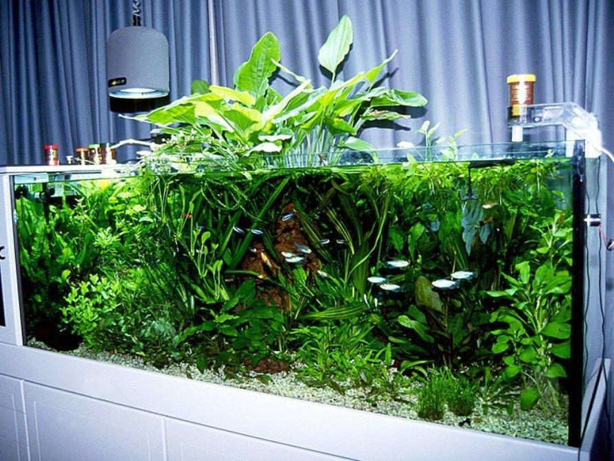 открытый вариант аквариума