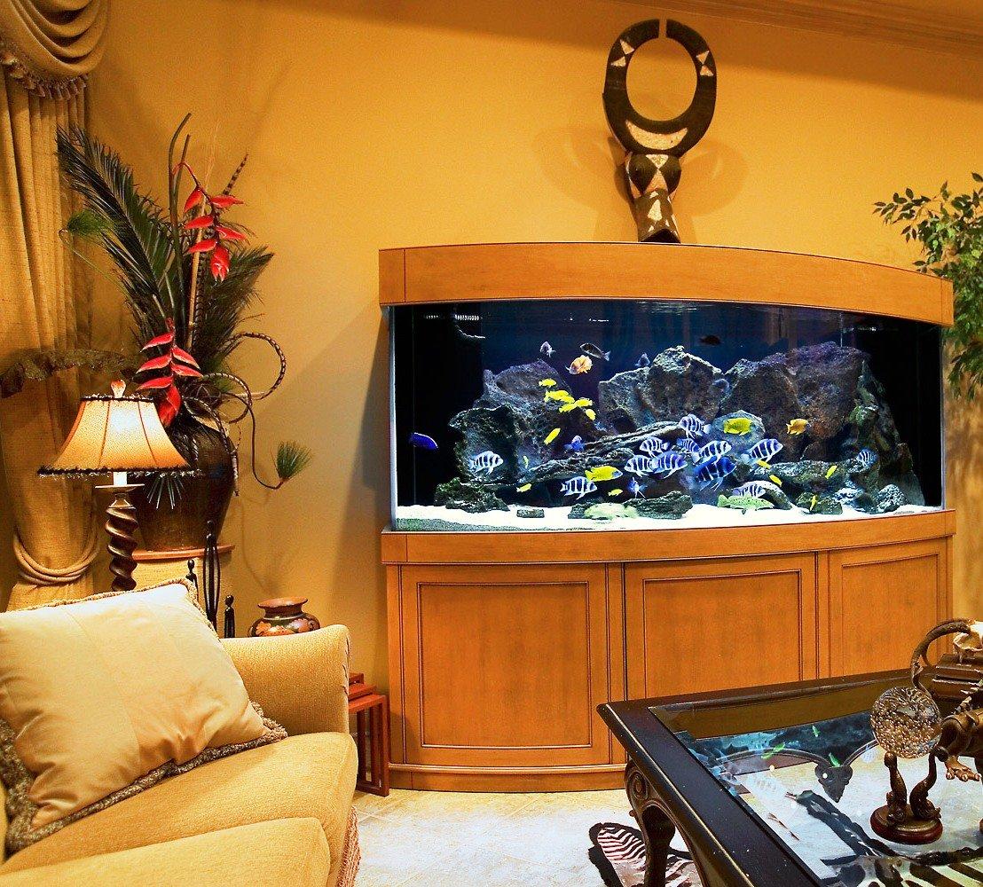 Дизайн и обстановка в аквариуме