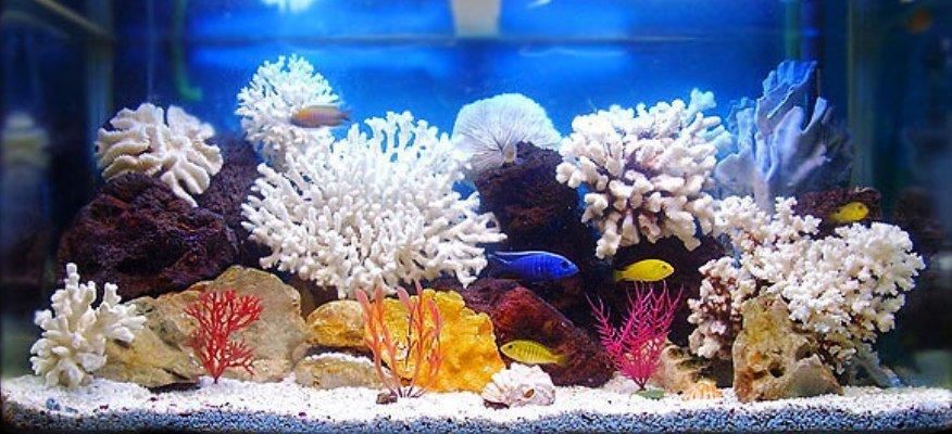 выбор аквариума для квартиры
