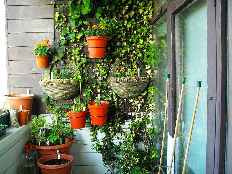 декорирование зимнего сада