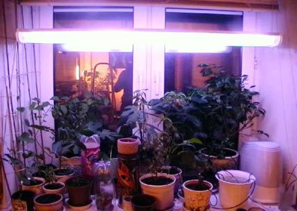 фитолампы в зимнем саду