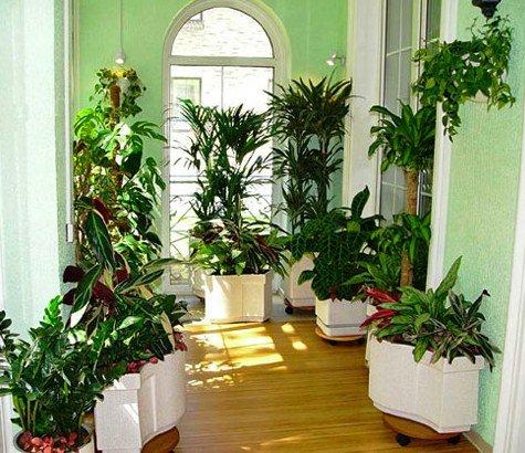 тропические растения в квартире